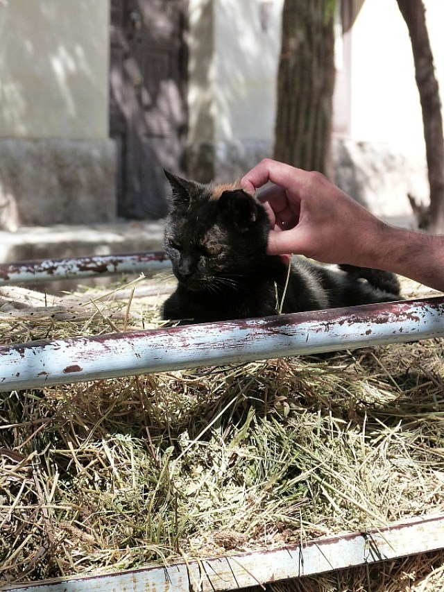 Kitty in Cachi, Northern Argentina
