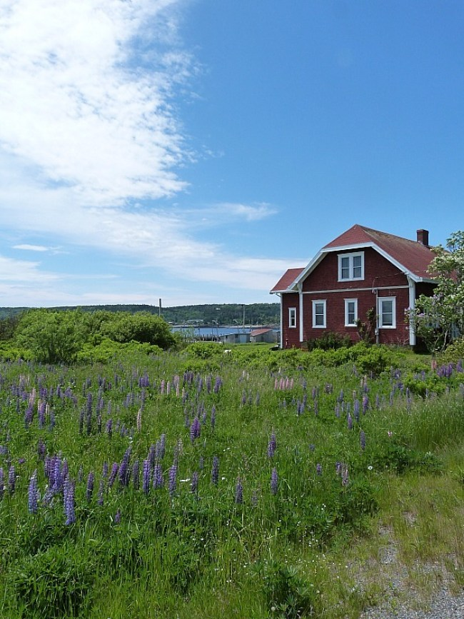 Local house on Grand Manan Island