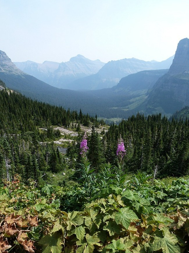 Gorgeous scenery in Glacier National Park in Montana - a Rocky Mountain Road Trip must