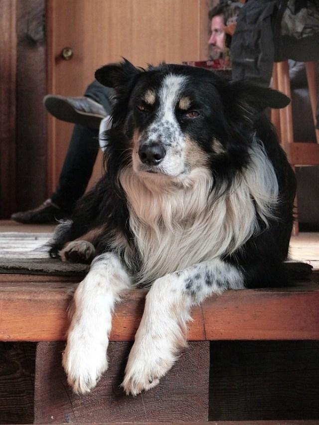 My Help X host's dog on Denman Island in Canada