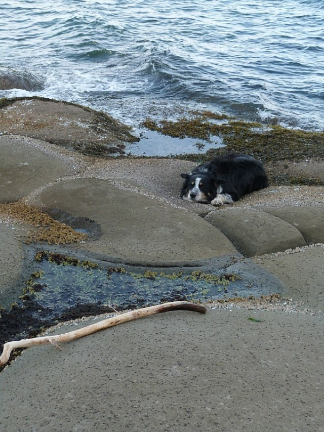 Coastal walks with my Help X host's dog on Denman Island in Canada