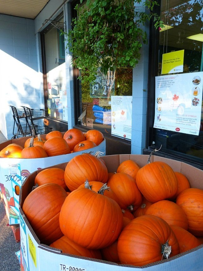 Pumpkins for sale in Heriot Bay, Quadra Island
