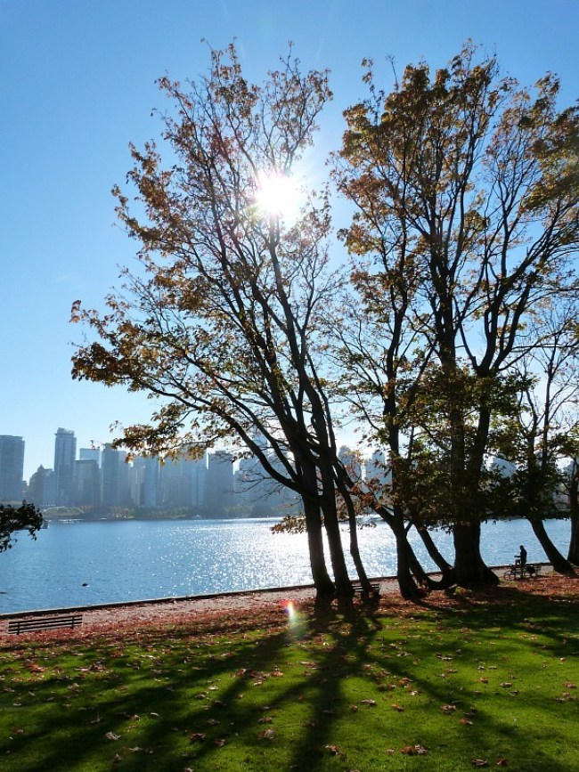 False Harbour in Vancouver during Fall