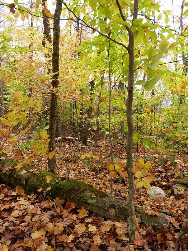 Hiking past colorful trees - one of the reasons to experience fall in North America
