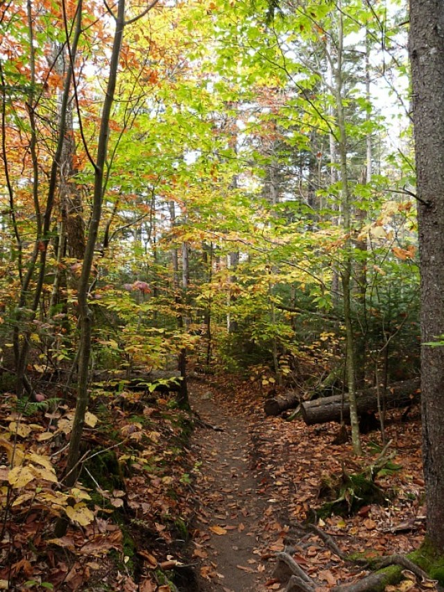 Fall foliage - one of the many reasons to experience fall in north america