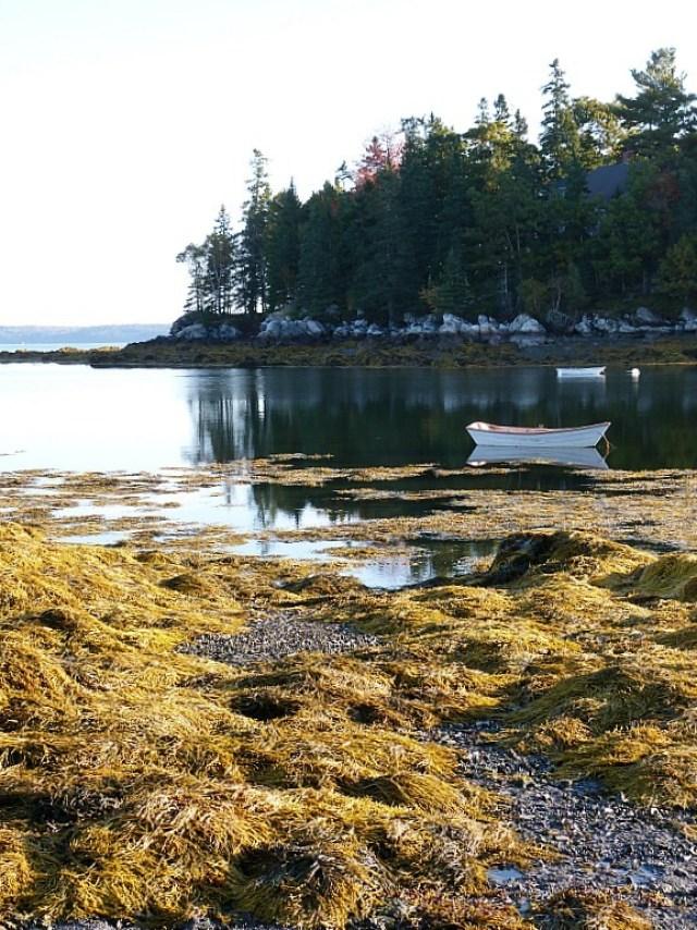 Salisbury Cove, Mount Desert Island, Maine