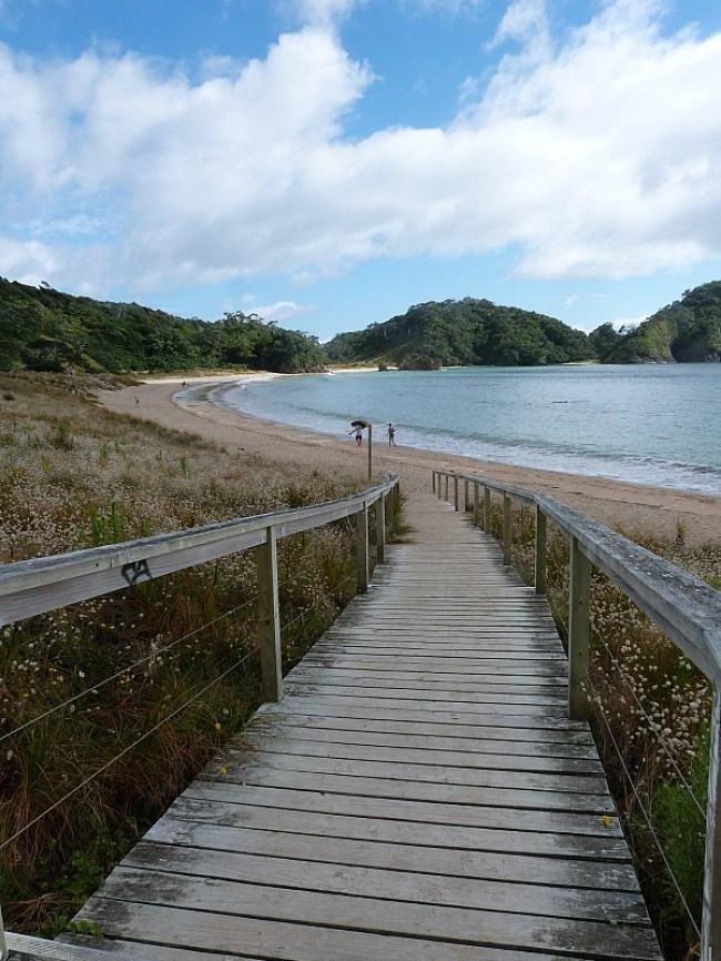 Tutukaka Coast in New Zealand - a highlight of a Northland Road Trip