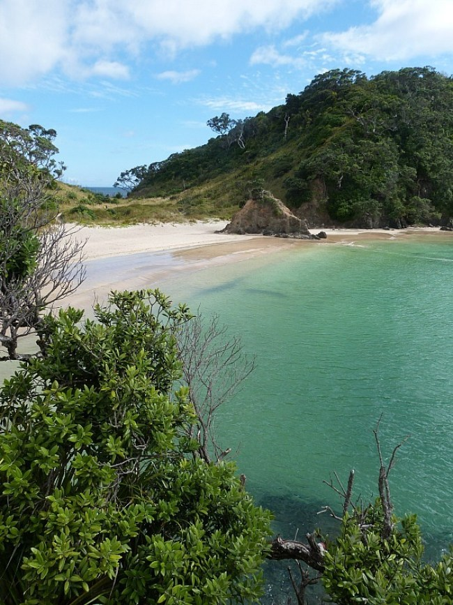 Whale Bay on Northland's Tutukaka Coast