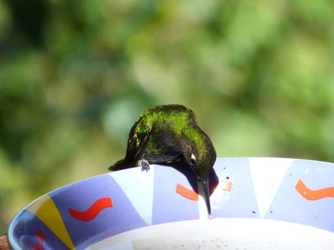 Hummingbird in Valle de Cocora near Salento, Colombia - one of the 10 Best Offbeat Places in South America