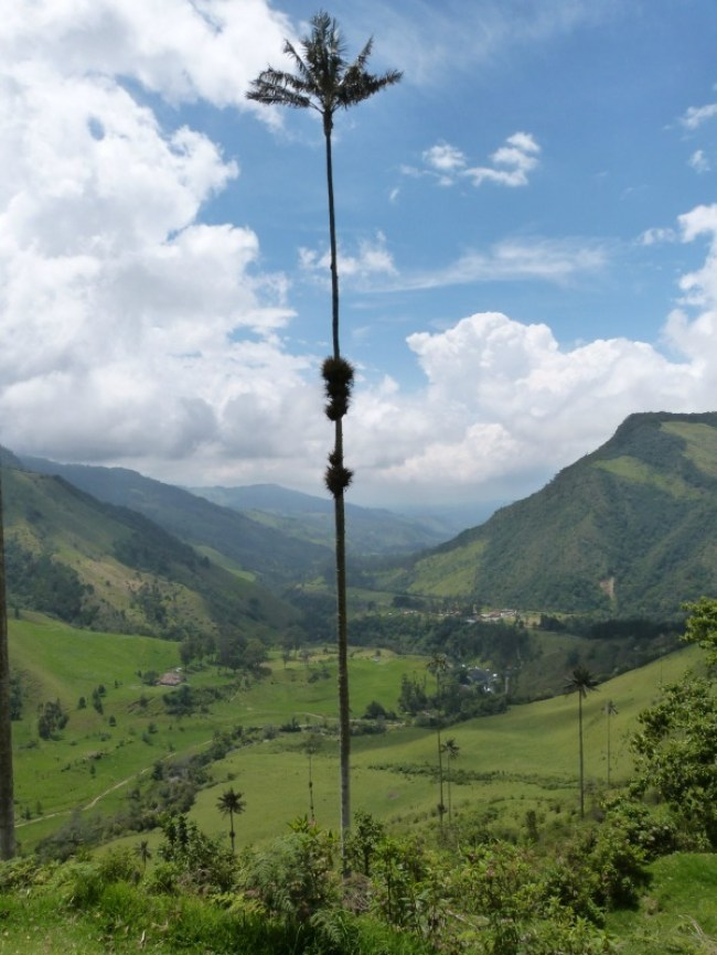 Hiking in Valle de Cocora near Salento, Colombia - one of the 10 Best Offbeat Places in South America