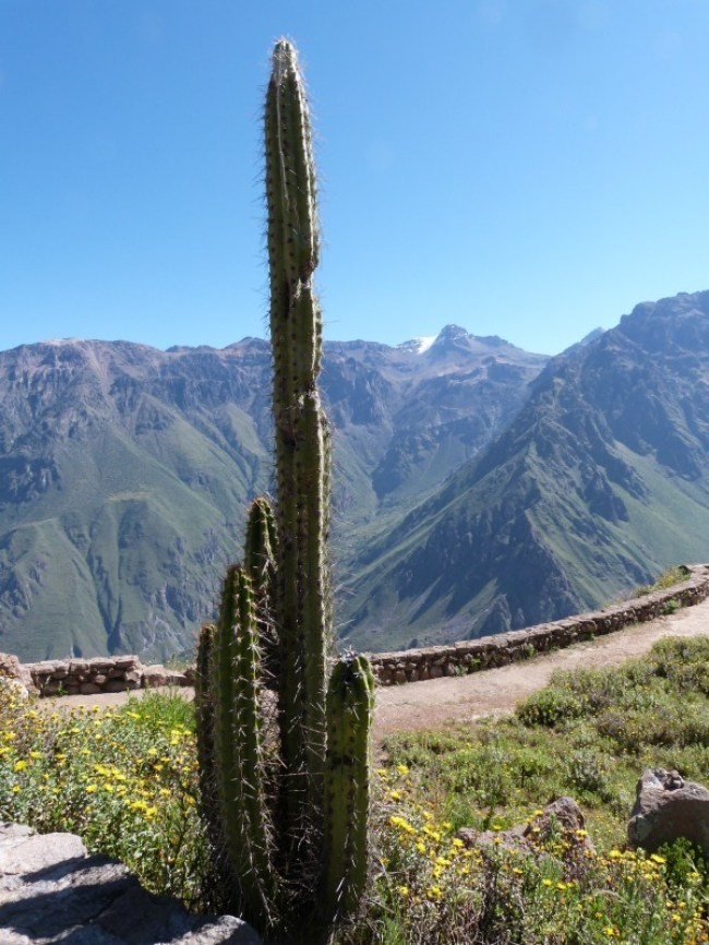 Exploring Colca Canyon, Peru - one of the 10 Best Offbeat Places in South America