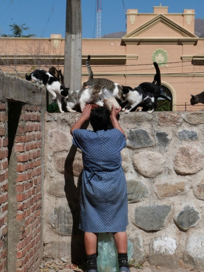 Crazy cat lady of Cafayate in Argentina - one of the 10 Best Offbeat Places in South America