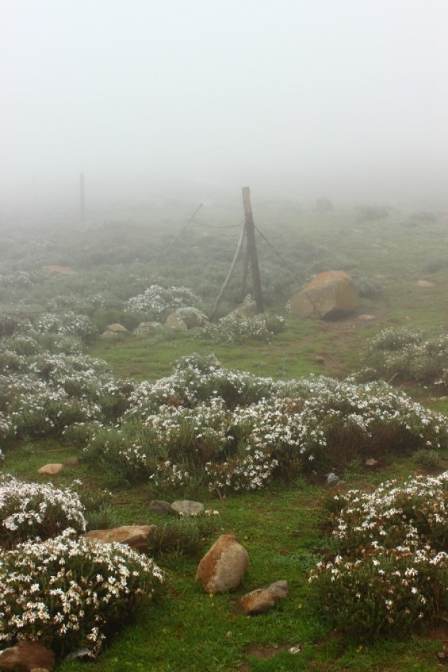 A foggy welcome to Sani Top in Lesotho