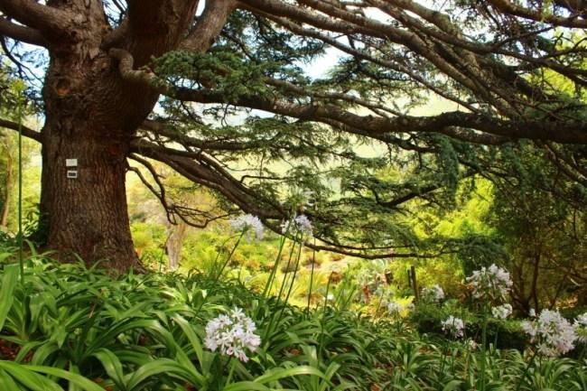 Exploring Kirstenbosch Gardens in Cape Town