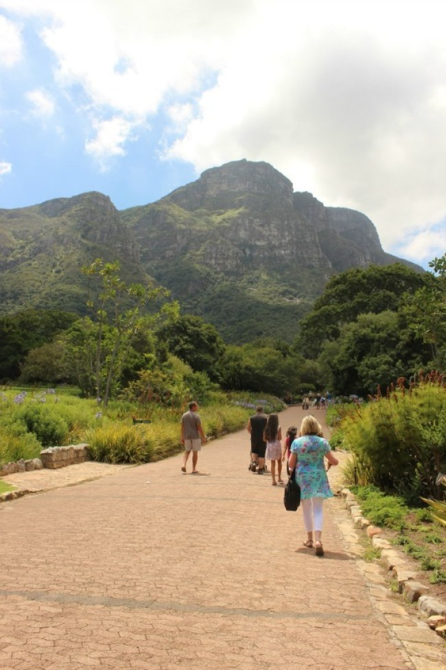 Exploring Kirstenbosch Gardens in Cape Town - one of the best places to visit in Cape Town