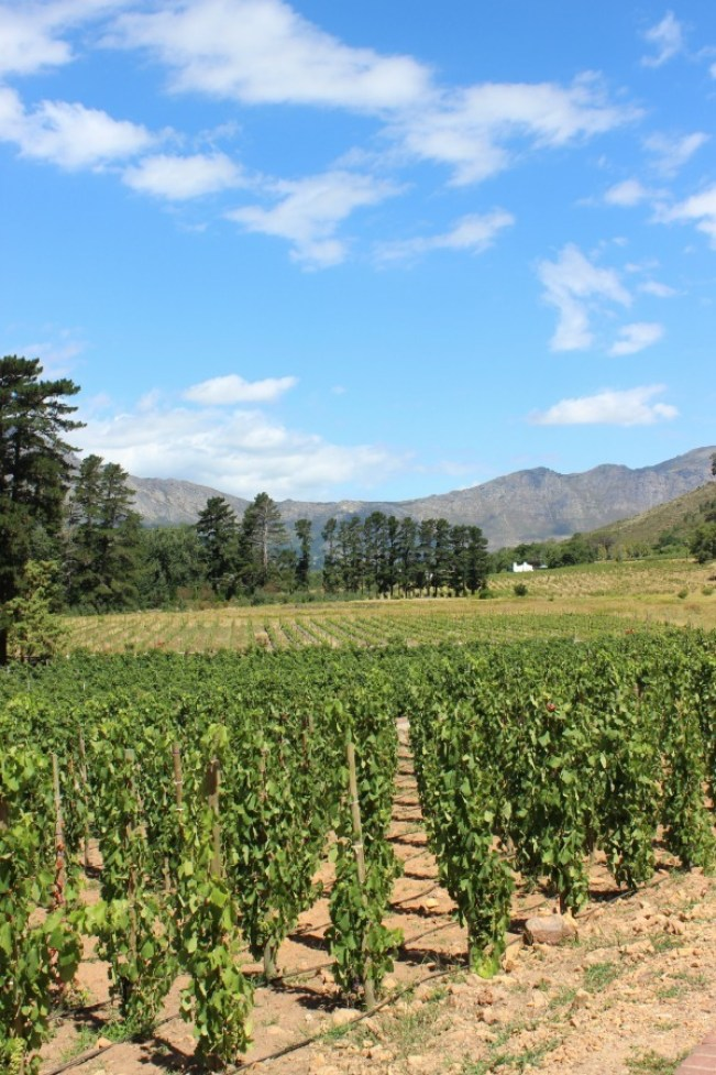 A day among the vines in the Cape Winelands