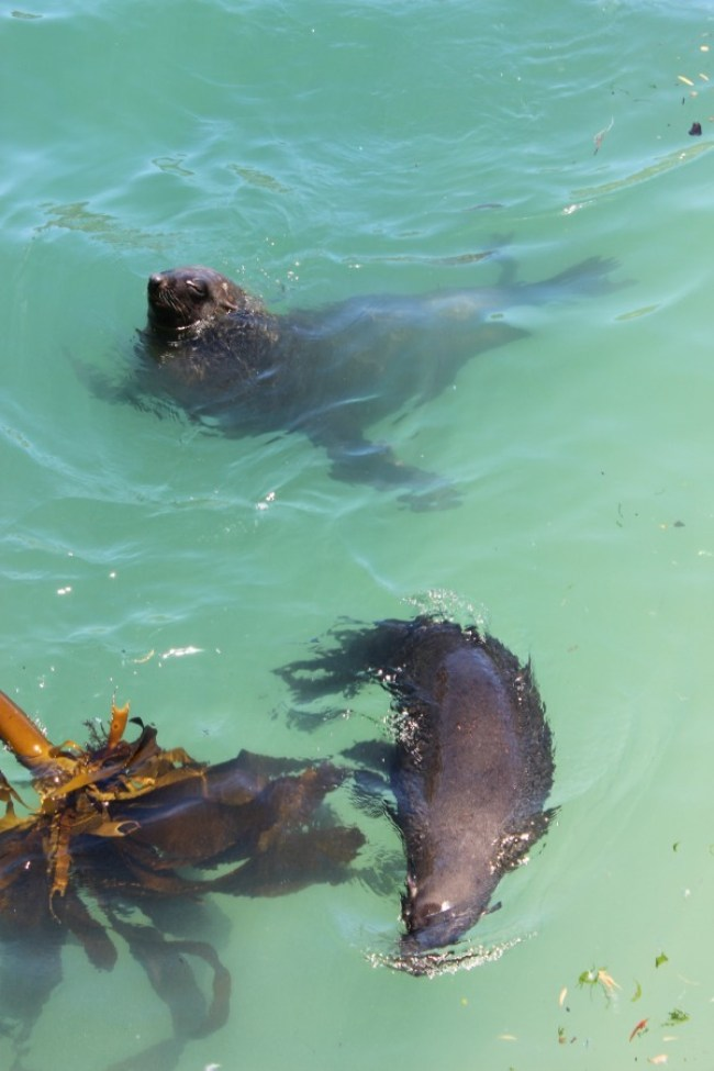 Hout Bay seals in Hout Bay - one of the best Cape Town Villages