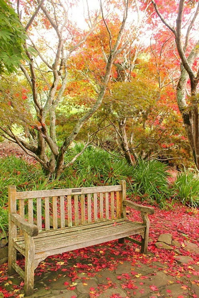 Autumn colours at Mount Tomah Botanical Gardens in Australia's Blue Mountains
