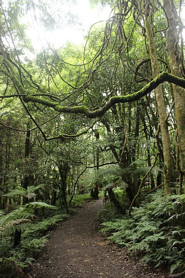 Rainforest walk at Mount Tomah Botanical Gardens in the Blue Mountains of Australia