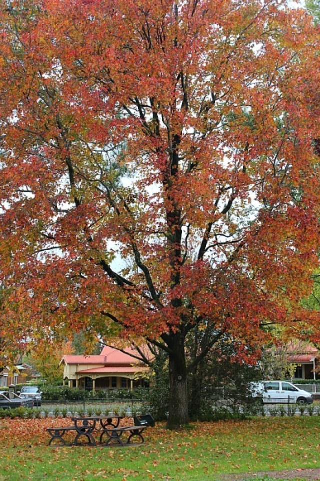 Autumn colours in Cook Park in Orange NSW