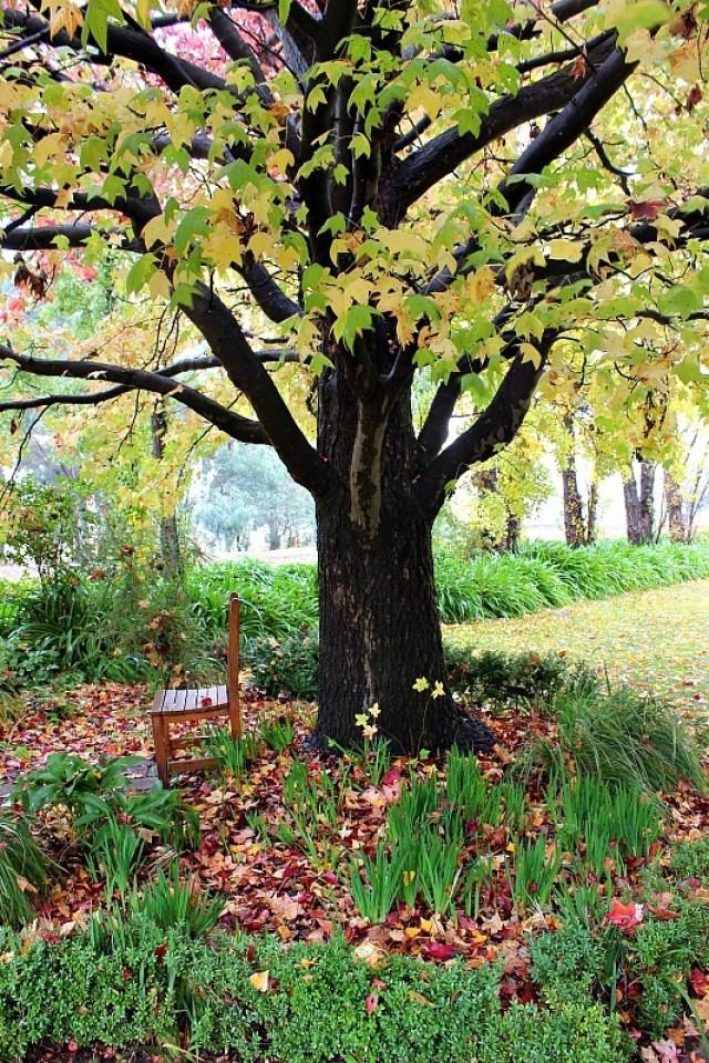 Autumn in Orange Botanical Gardens in Orange NSW