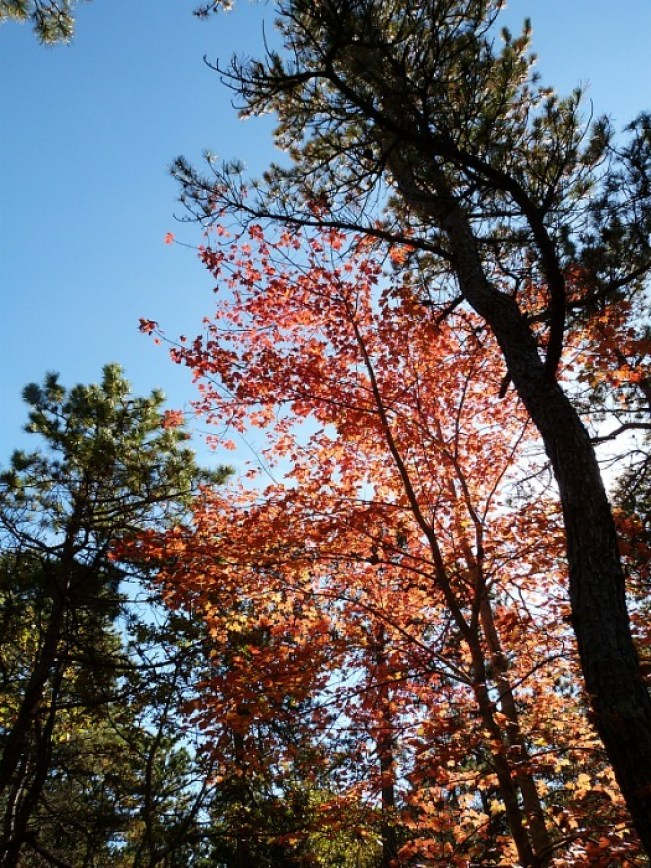 Fall colours in Provincetown - one of the best small towns in Massachusetts