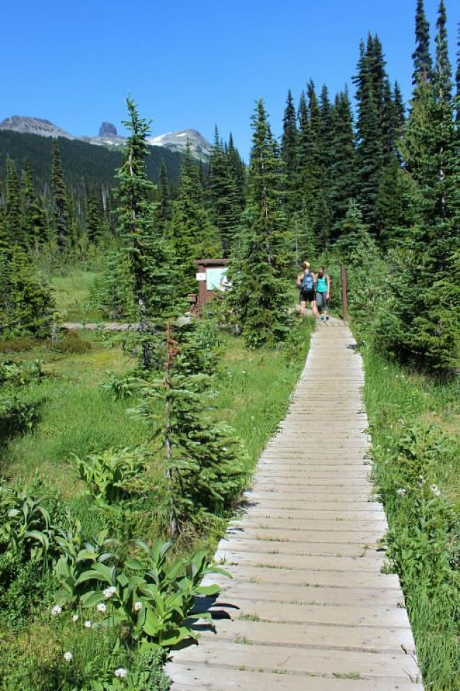 Hiking Taylor Meadows on the way back from Garibaldi Lake