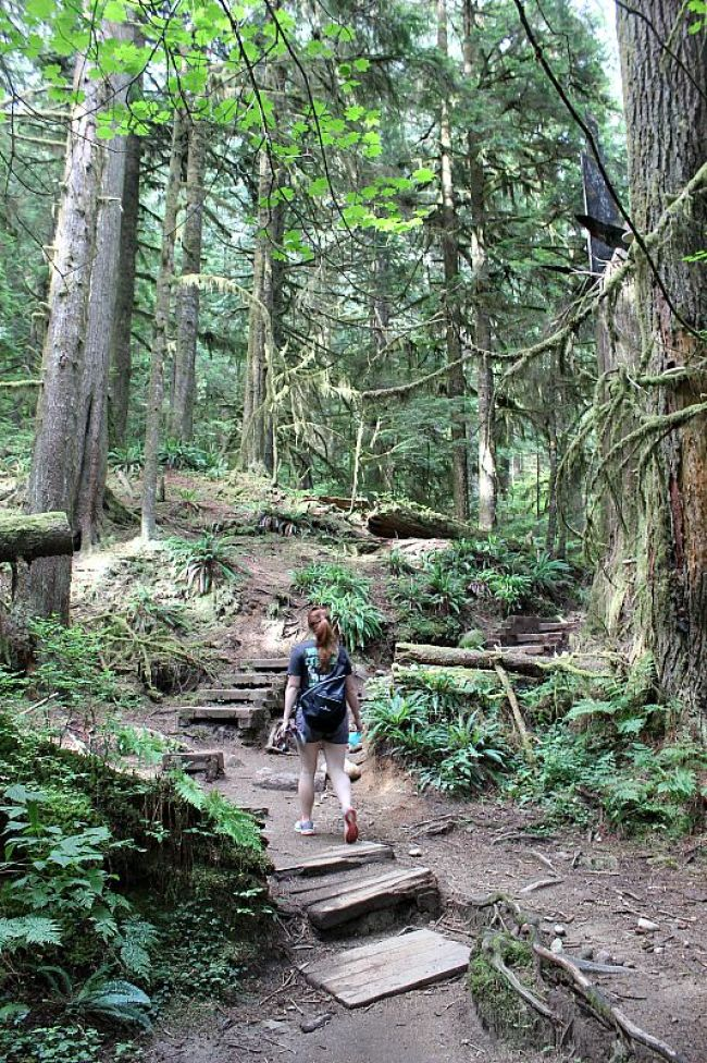 The Best Vancouver Itinerary: 4 Days in Summer. Hiking in Lynn Canyon during summer in Vancouver