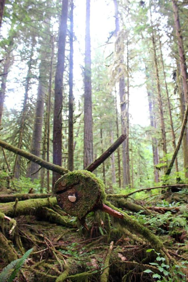 The Best Vancouver Itinerary: 4 Days in Summer. Hiking in Lynn Canyon Park during summer in Vancouver