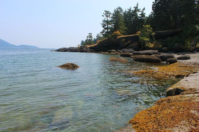 Exploring the rocky coastline on Denman Island, Canada