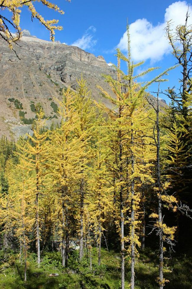 Hiking to see the Larch trees turned golden for fall in the Rocky Mountains during month three of digital nomad life