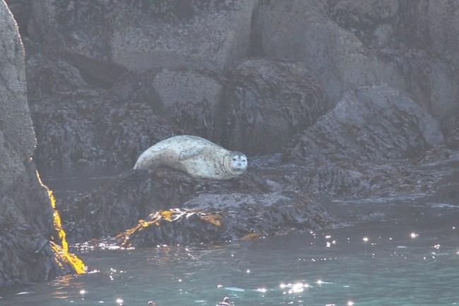 Seal in Kenai Fjords National Park in Alaska