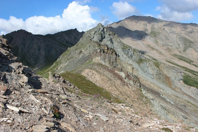 Mount Healy summit in Denali National Park