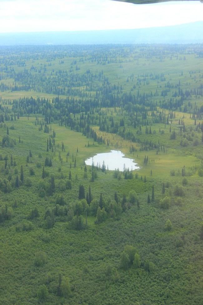 Talkeetna surrounds from a Denali Flight tour