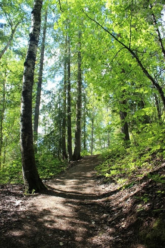 Soren Sorensen trail in Mount Revelstoke National Park