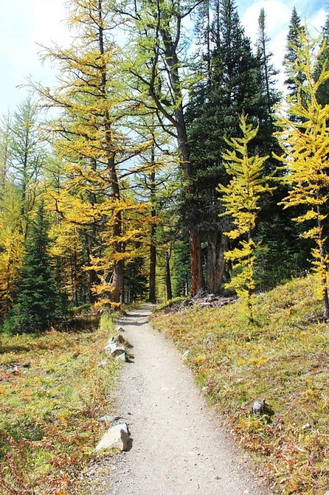 Beginning of the Larch Valley hike - one of the best fall hikes in Banff National Park