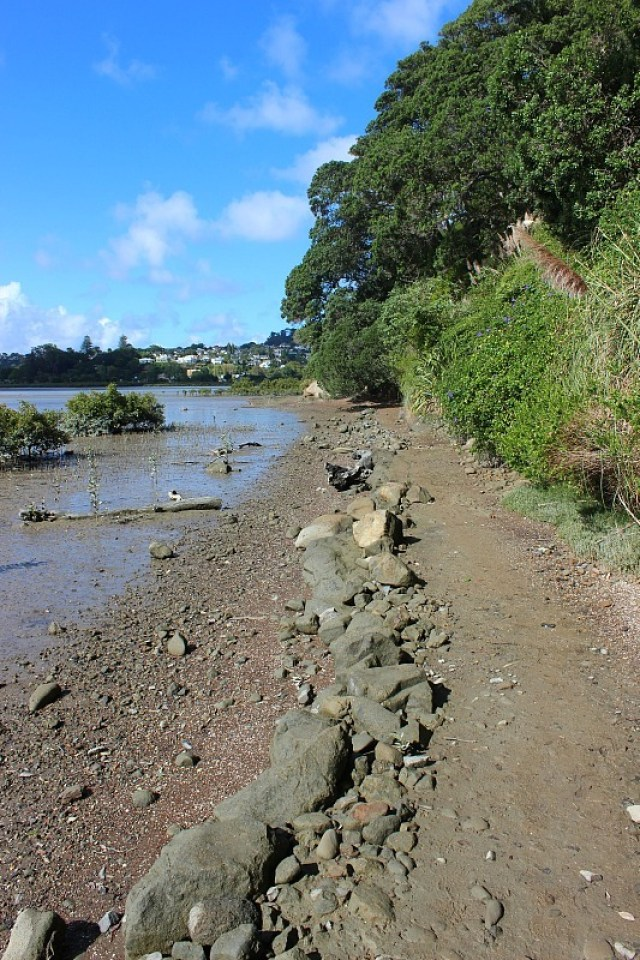 Walking the walkway around Hobsons Bay in Auckland during month nine of digital nomad life