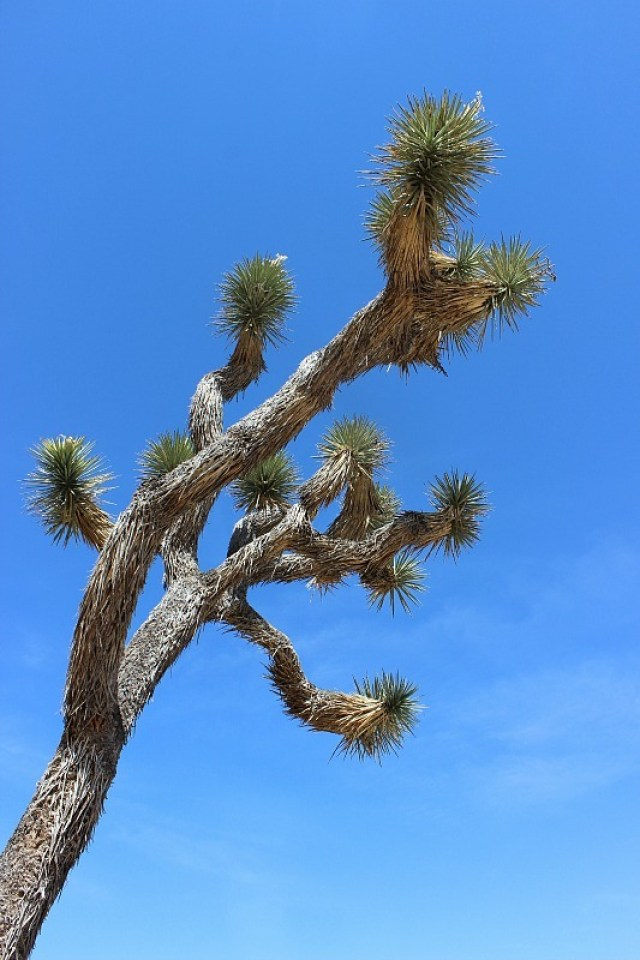 Discovering Joshua Tree National Park during month 10 of digital nomad life