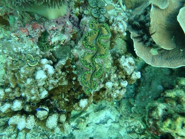 Underwater scene during our Koh Lipe snorkeling trip