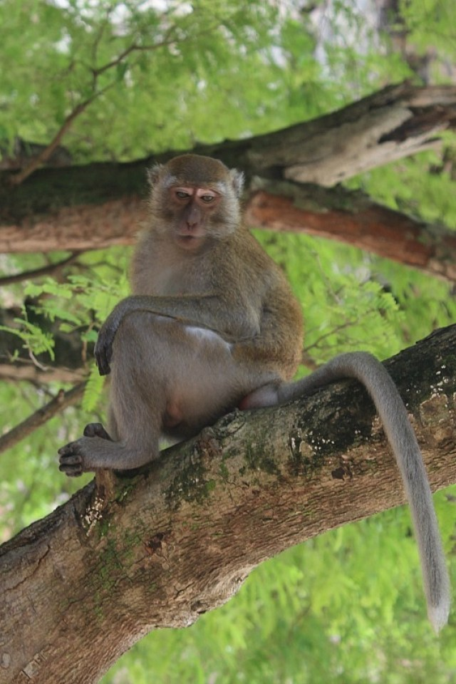 Railay beach monkey