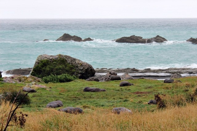Cape Palliser on our New Zealand glamping trip