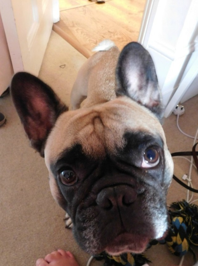 Petsitting a needy dog in London UK