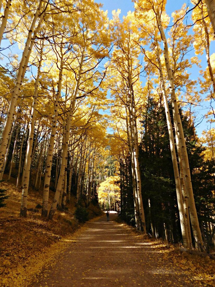 Hiking the San Francisco peaks near Flagstaff, Arizona during Month Twenty Eight of Digital Nomad Life