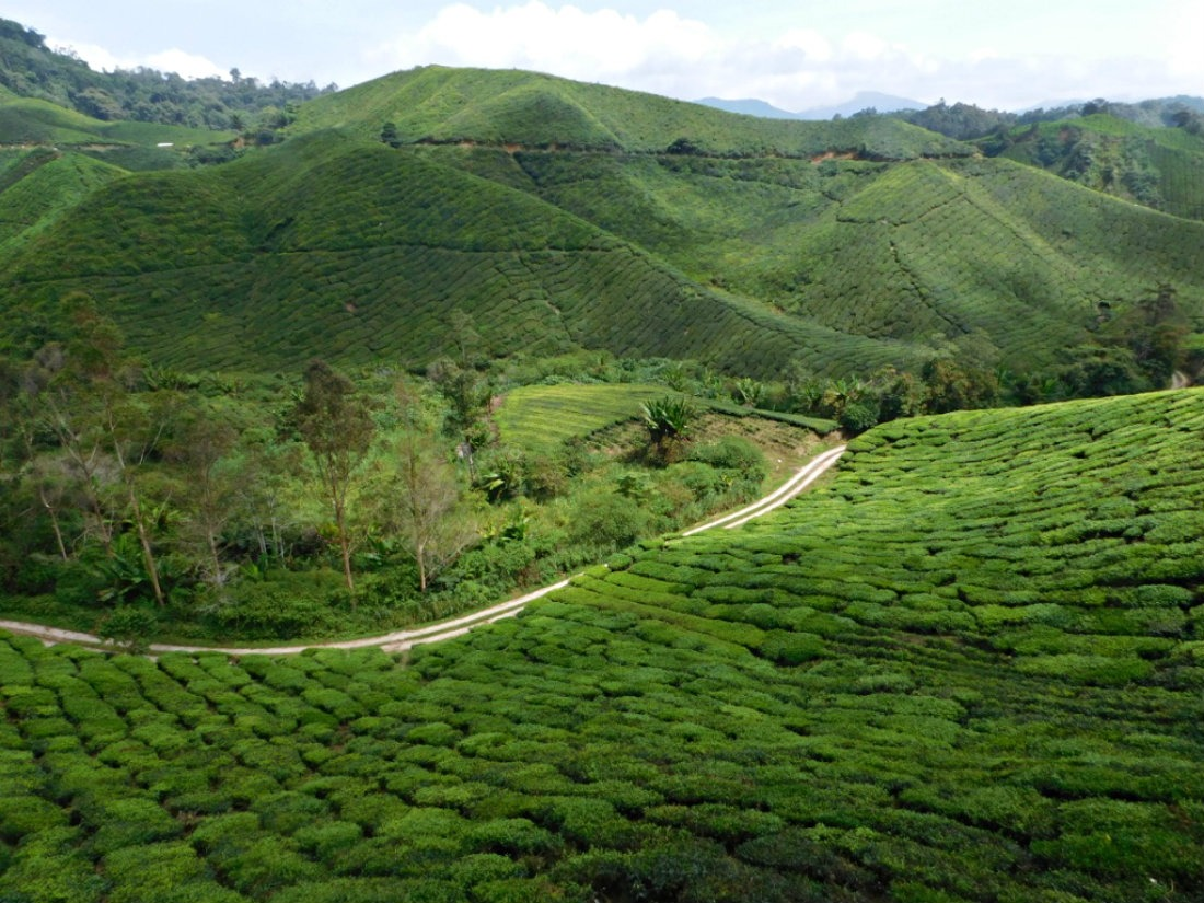 Checking out the tea plantation in the Cameron Highlands during month thirty two and thirty three of Digital Nomad Life