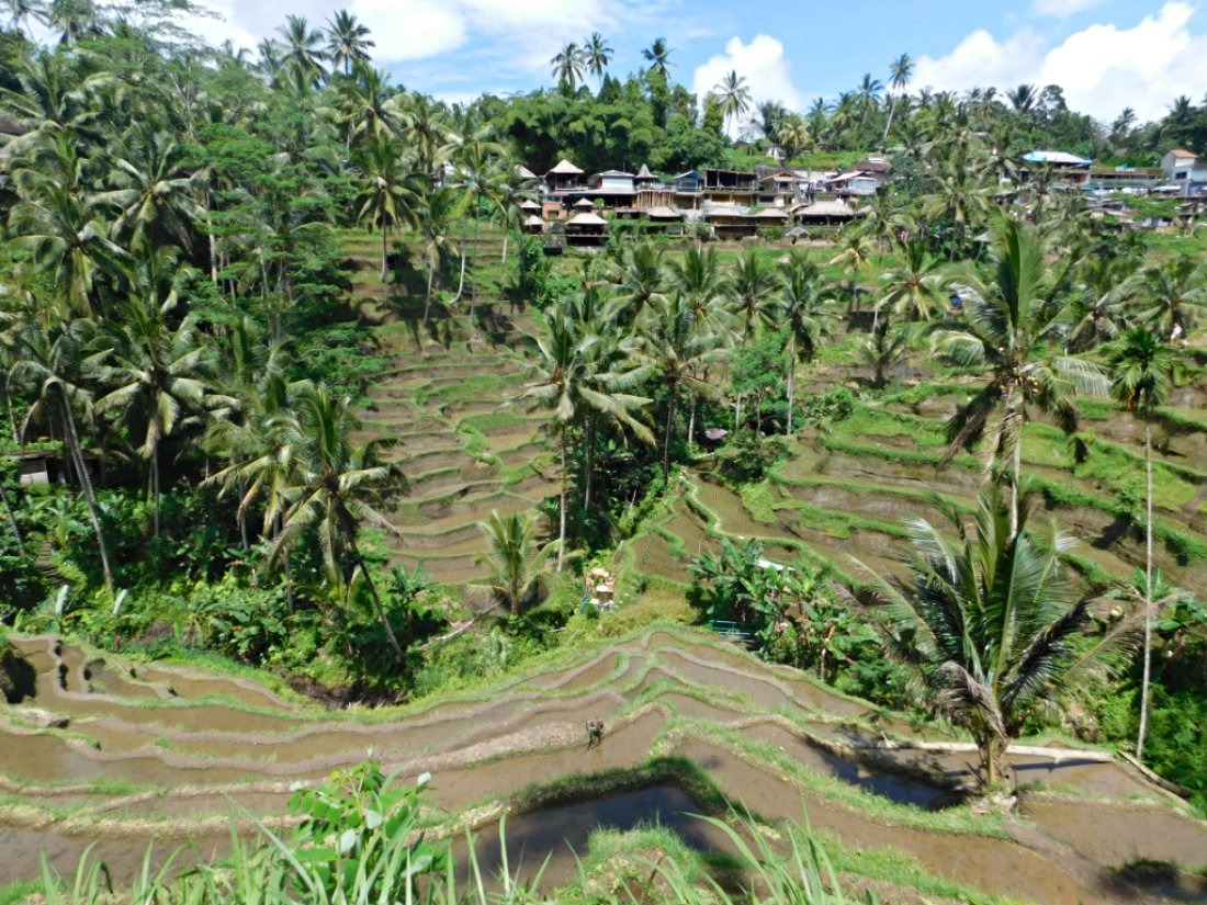 Exploring the rice terraces around Bali during month thirty two and thirty three of Digital Nomad Life