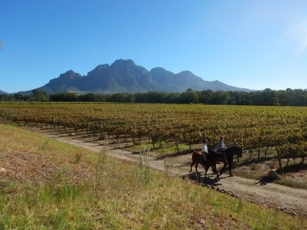 Winetasting in South Africa