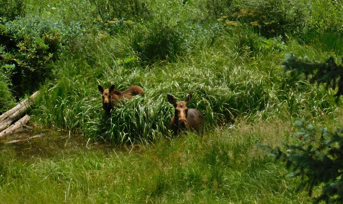 Spotting moose on a hike in Colorado during month thirty eight of Digital Nomad Life