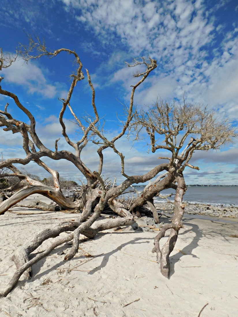 Driftwood Beach on Jekyll Island in Georgia