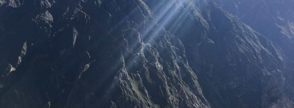 Discover the wildlife in the Colca Canyon, Peru, WildSide, World Wild Web