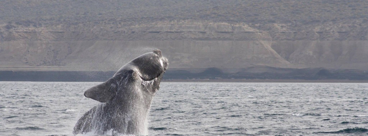 Best places to see southern right whales, WildSide, World Wild Web